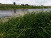 Участок под застройку с. Зазимье 25 соток в 50 метрах от речки Десна - foto 2